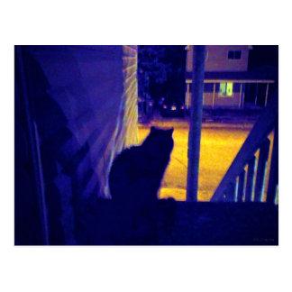 Gato en la noche en la vecindad vieja tarjetas postales