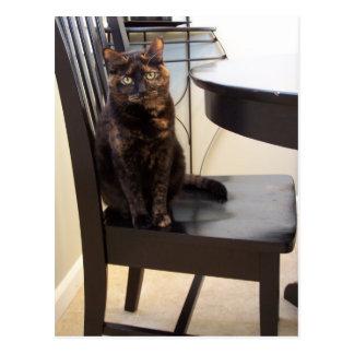 gato en la silla de tabla tarjetas postales