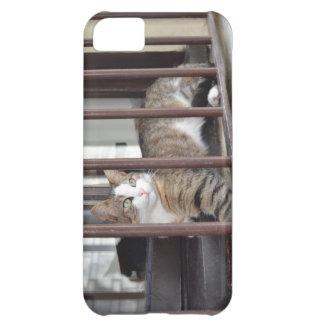 Gato en la ventana funda iPhone 5C