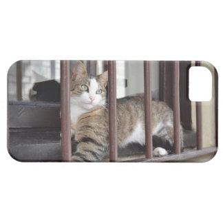 Gato en la ventana funda para iPhone SE/5/5s