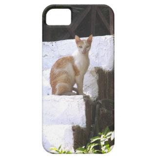 Gato en las escaleras iPhone 5 carcasa