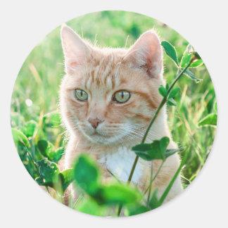 Gato en naturaleza pegatina redonda