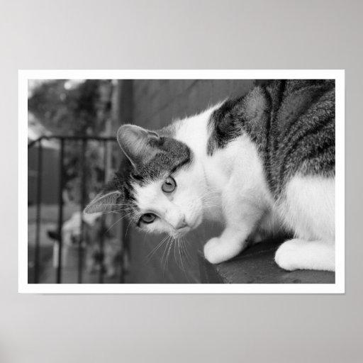 Gato en pájaro de observación de la repisa póster