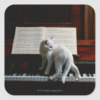 Gato en piano colcomanias cuadradass
