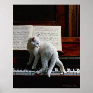 Gato en piano póster