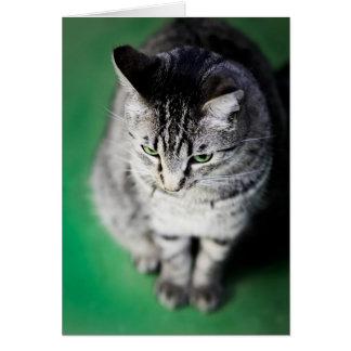 Gato en piso verde tarjeta de felicitación