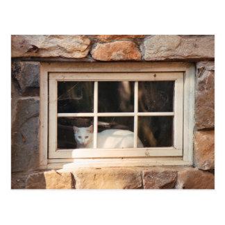 Gato en postal de la ventana