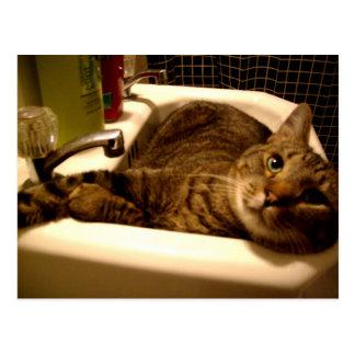 gato en postal del fregadero