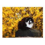 Gato en postal del otoño