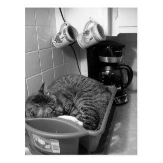 Gato en postal del palero de plato