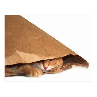 Gato en saco del papel marrón postal