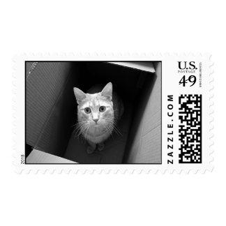 Gato en sellos de la caja