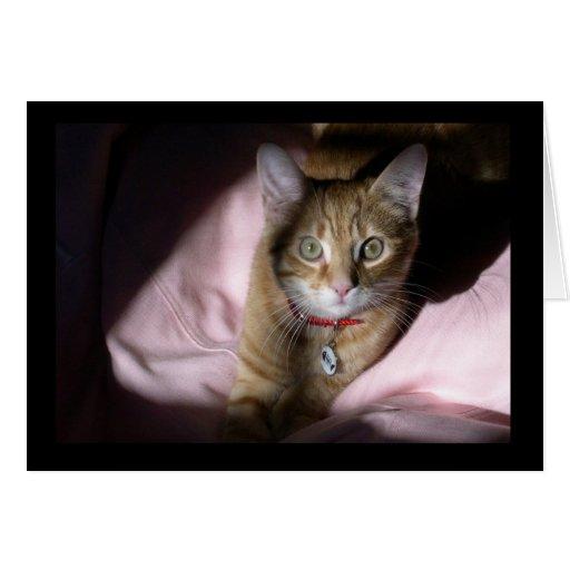 Gato en silla del Beanbag Tarjeta De Felicitación