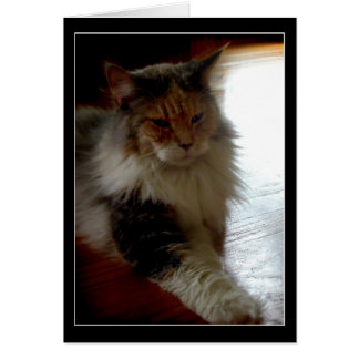 Gato en tarjeta de felicitación soleada de la foto