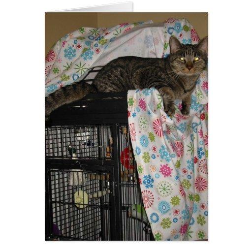 gato en tarjeta del birdcage
