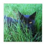 Gato en teja de la hierba