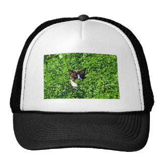 Gato en un campo gorras