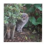 gato en un jardín tejas  ceramicas