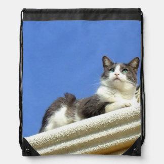 Gato en un saco de la cincha del balcón mochila