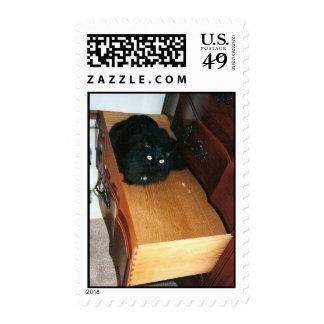 gato en un sello del cajón