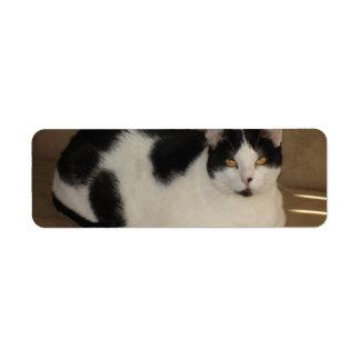 Gato en un sofá etiquetas de remite