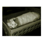 gato en una caja postal