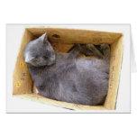 Gato en una caja - tarjeta