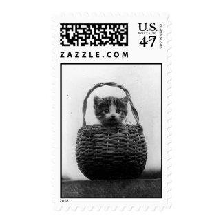 Gato en una foto del vintage de la cesta sellos