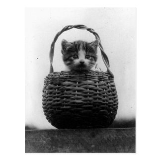 Gato en una foto del vintage de la cesta tarjeta postal