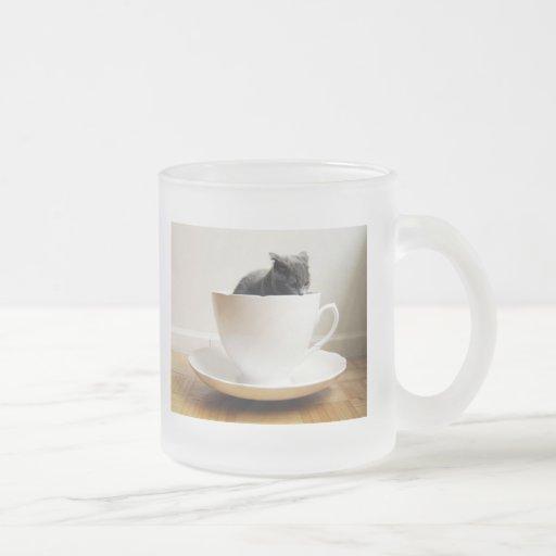 gato-en-uno-taza taza de cristal