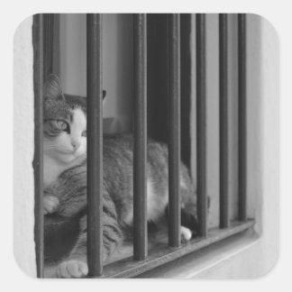 Gato en ventana calcomanías cuadradass personalizadas