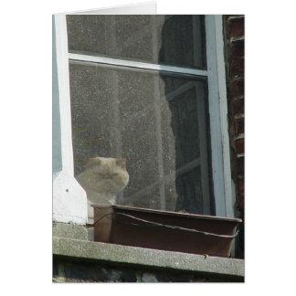 Gato en ventana tarjeta pequeña