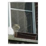 Gato en ventana tarjetas