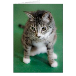 Gato en verde tarjeta de felicitación