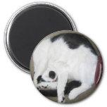 Gato Encrespado-Para arriba Imán Para Frigorifico