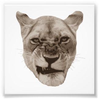 Gato enfadado del león del gruñido cojinete