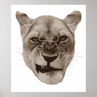 Gato enfadado del león del gruñido póster