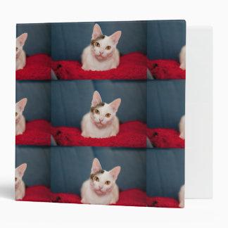 """Gato enfocado del gatito carpeta 2"""""""