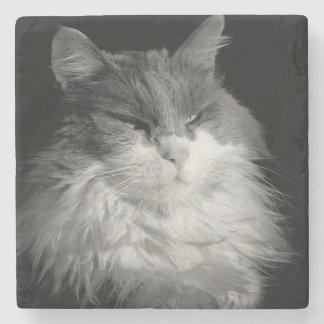Gato enmascarado del palo posavasos de piedra
