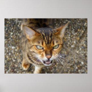 Gato enojado de Bengala Poster