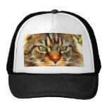 Gato enojado gorra