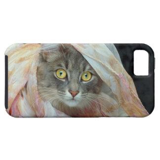 Gato envuelto en paño iPhone 5 cobertura