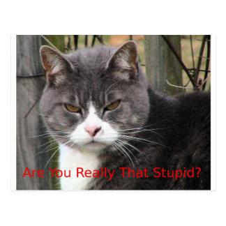 Gato: ¿Es usted realmente ese estúpido? Postales