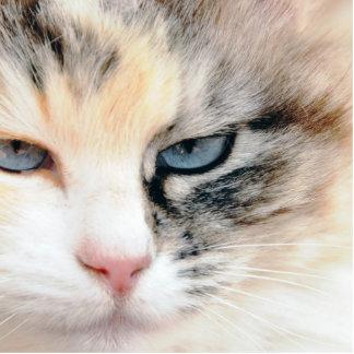 Gato Escultura Fotografica