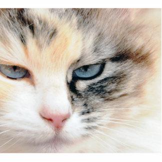 Gato Esculturas Fotograficas