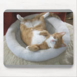 Gato feliz tapetes de ratón