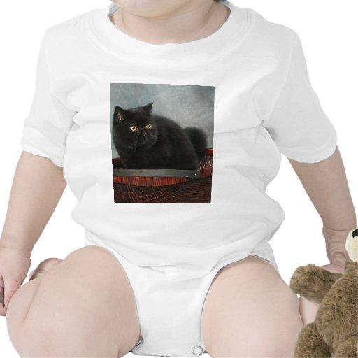 gato feliz trajes de bebé
