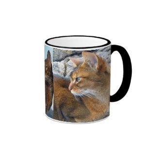 Gato femenino abisinio rubicundo tazas de café