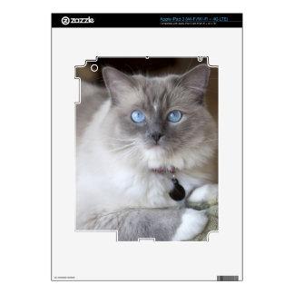 Gato femenino de Ragdoll iPad 3 Skins