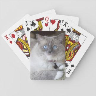 Gato femenino de Ragdoll Barajas De Cartas